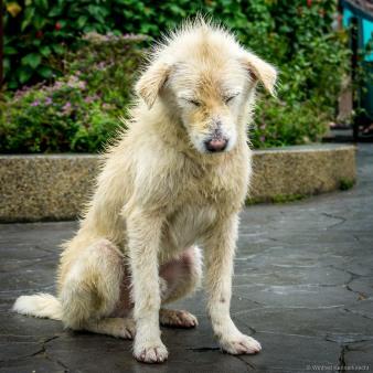 A sad dog.