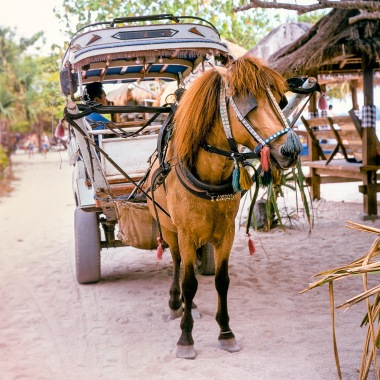 Cidomo, a type of horse carriage on Gili Meno.