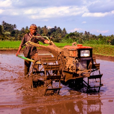 A rice farmer working a cultivator on a rice field on Lombok.