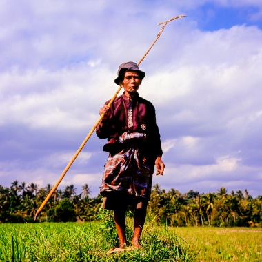 A duck herder on Lombok